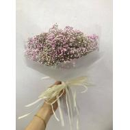 Baby Breath Pink Colour